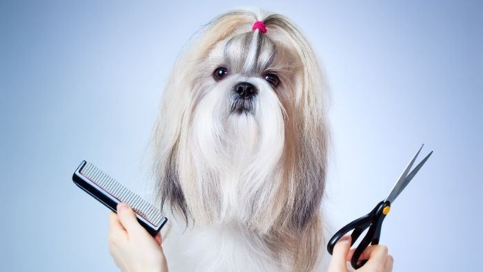 DIY Dog Grooming Tips photo