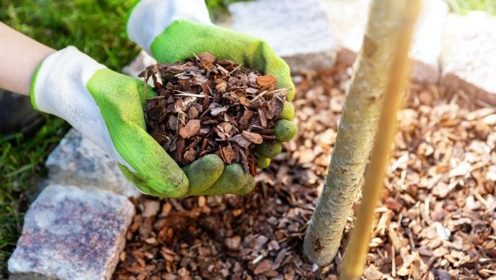 Free and cheap Sources of Mulch photo
