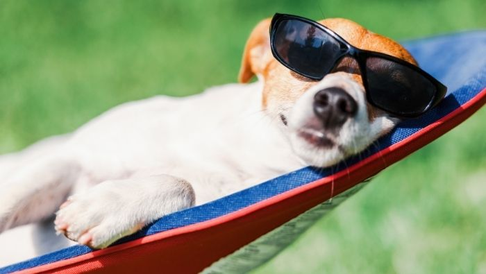 Finding Affordable Pet Care Options for When You Travel photo