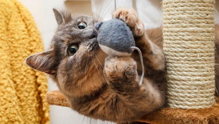 Cat Essentials You Can DIY photo