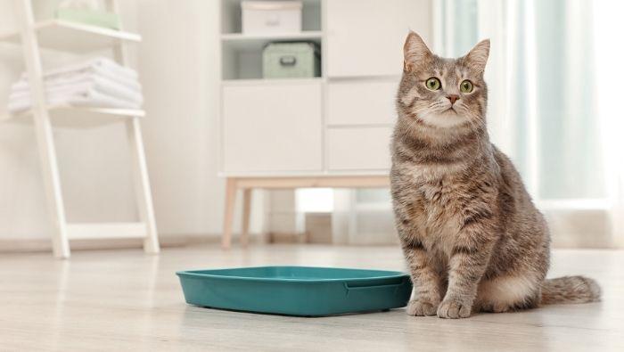 Cheaper Kitty Litter Alternatives photo