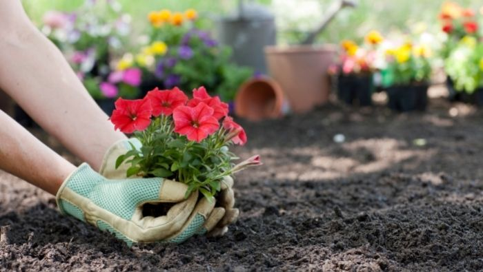 DIY No-Cost Flower Beds photo