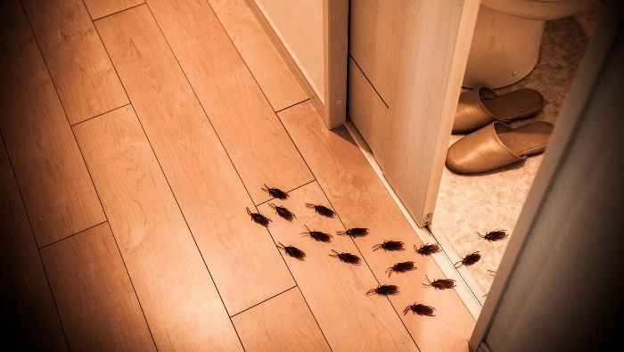 Effective Ways to Affordably Get Rid of Roaches photo