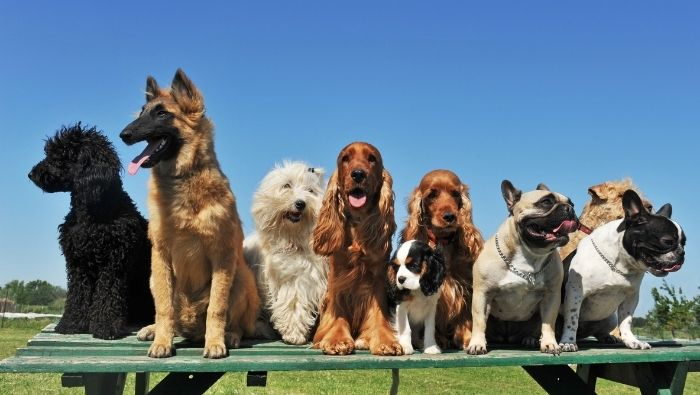 Don't Let Dog Increase Homeowners Insurance photo