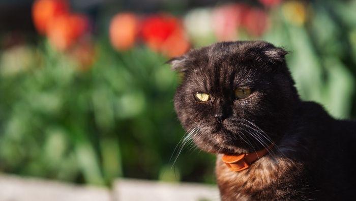 Humane Ways to Cat-Proof Garden photo