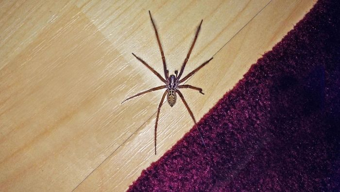 Natural Methids to Get Rid of Spiders Inexpensively photo