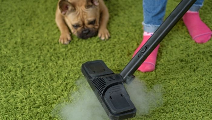 Removing Pet Urine Stains from Carpet photo