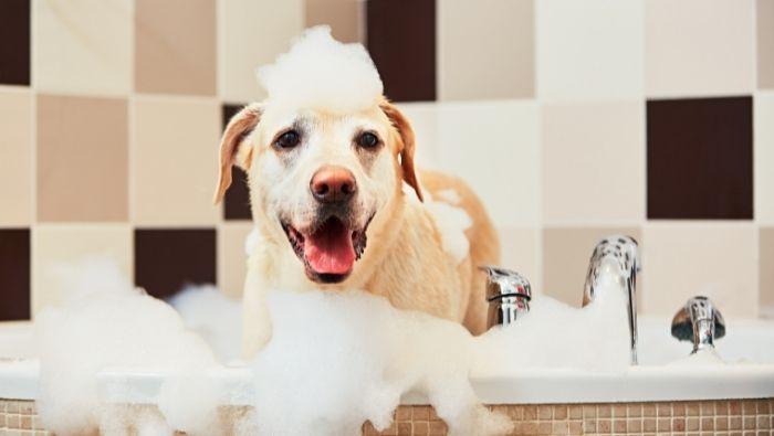 Cheap DIY Natural Dog Shampoo Recipes photo
