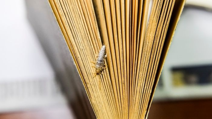 Frugal Methods of Ridding Your Home of Silverfish photo