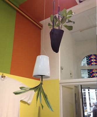 Les plantes vertes s' invitent dans vos intérieurs !