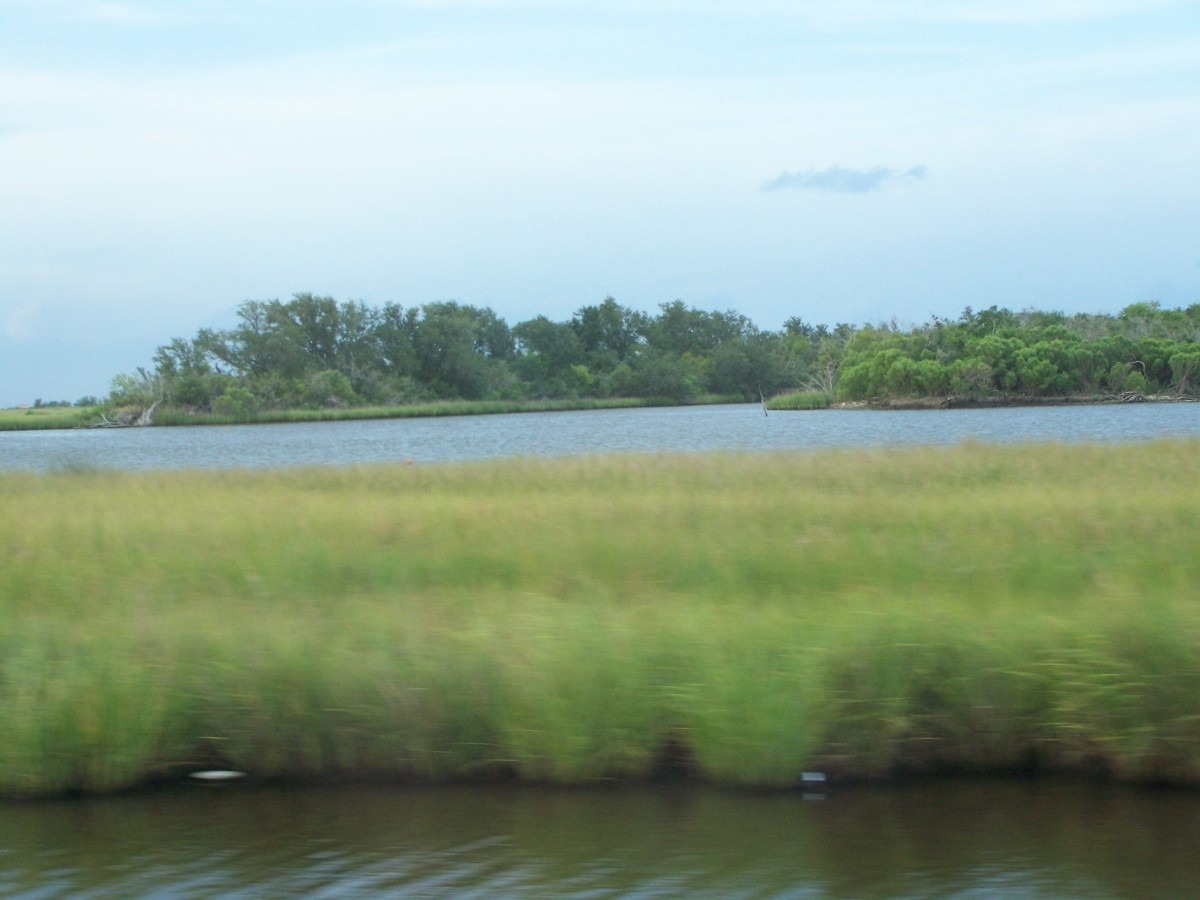These southern Marsh Pictures draw me near every time I look at them.