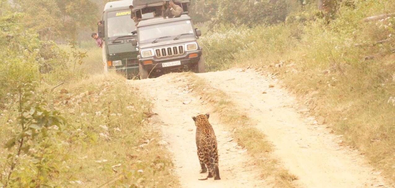LeopardSafari5