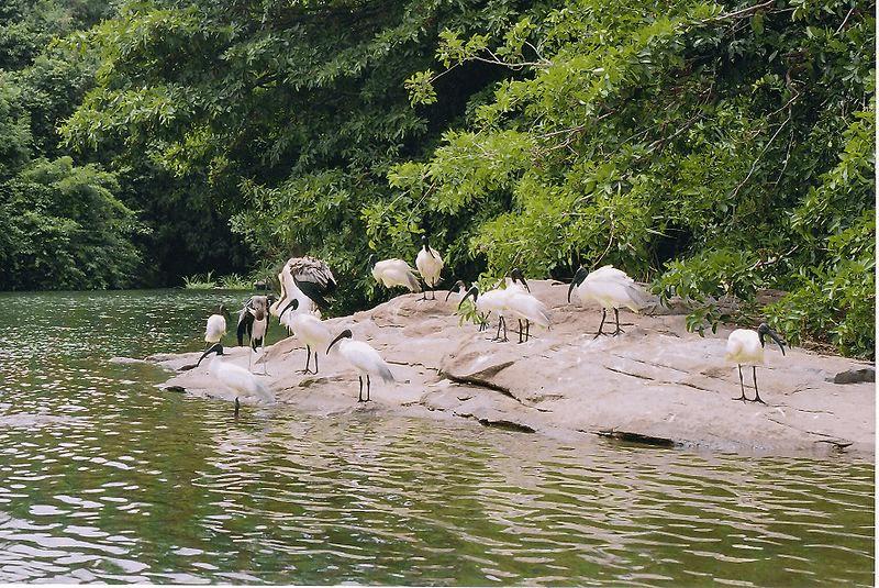 ranganathittu bird sanctuary, escape2wildlife
