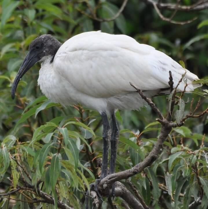 TOP 10 One day Wildlife Getaways From Bangalore - PART 2 - NEXT 3 (4,5 & 6) - Kaggaladu Bird Sanctuary