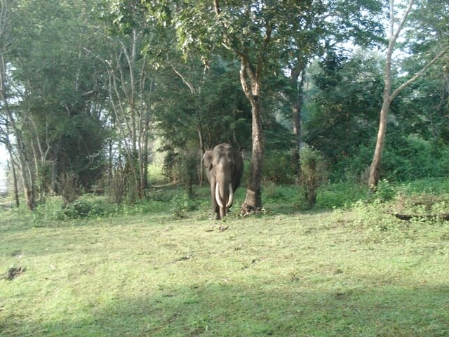Brahmagiri Wildlife Sanctuary . [The WildTrails of India app is the best way to get all the details about Indian wildlife sanctuaries (best travel times, animal sightings, safari details, accommodations, activities, prices, etc). Learn more about WildTrails of India here.]