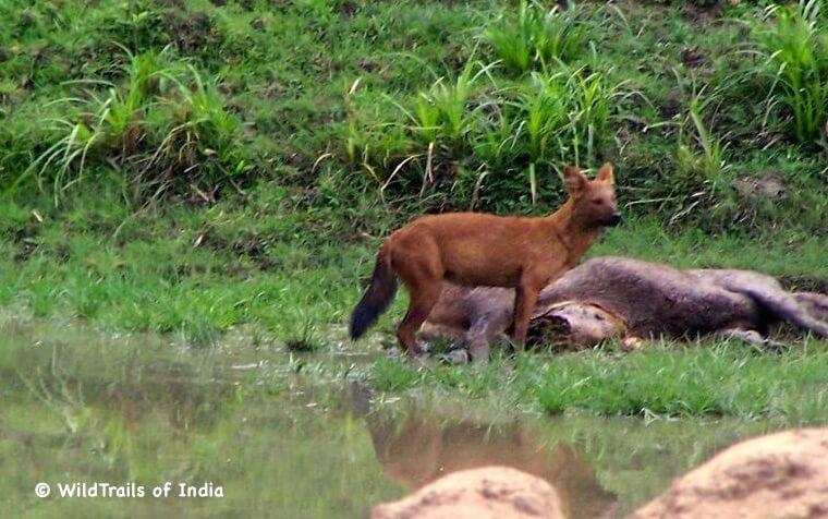 "Chenthuruni Wildlife Sanctuary (Shenduruny Wildlife Sanctuary), WildTrails of India - ""One Stop Destination for all Indian Wildlife Enthusiasts"""