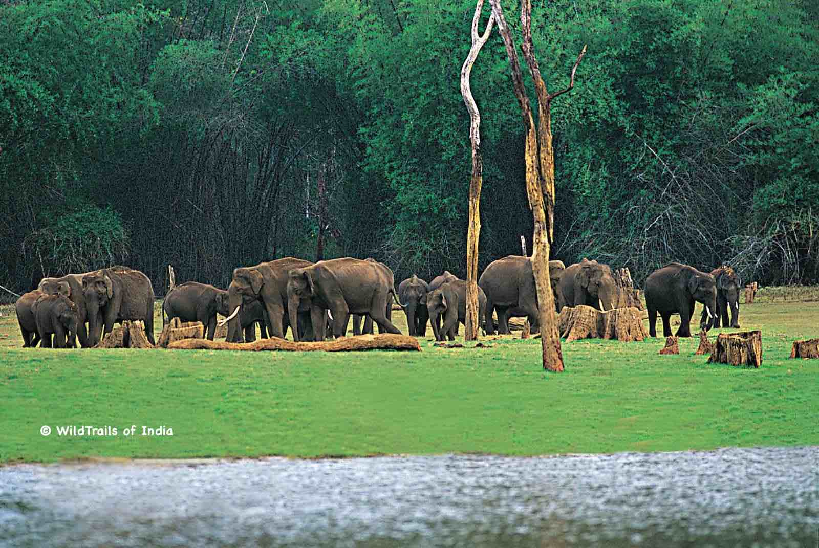 """Chinnar Wildlife Sanctuary. WildTrails of India - """"One Stop Destination for all Indian Wildlife Enthusiasts"""""""