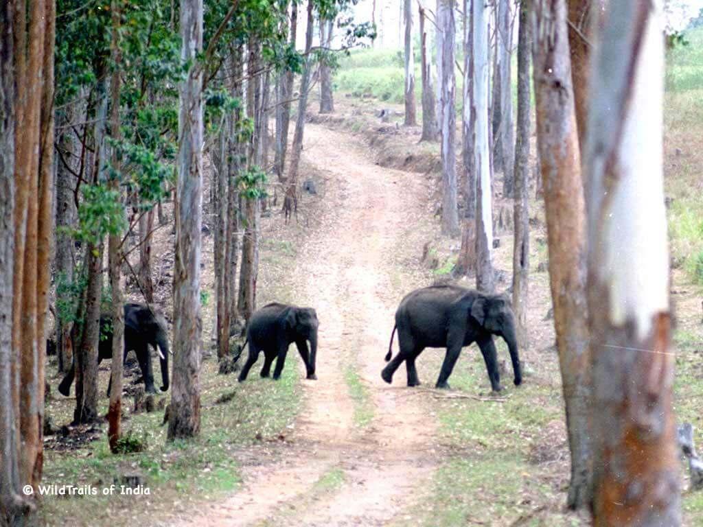 "Idukki Wildlife Sanctuary, WildTrails of India - ""One Stop Destination for all Indian Wildlife Enthusiasts"""