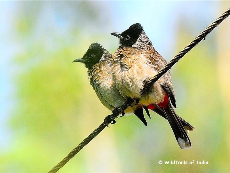 """Mangalavanam Bird Sanctuary. WildTrails of India - """"One Stop Destination for all Indian Wildlife Enthusiasts"""""""