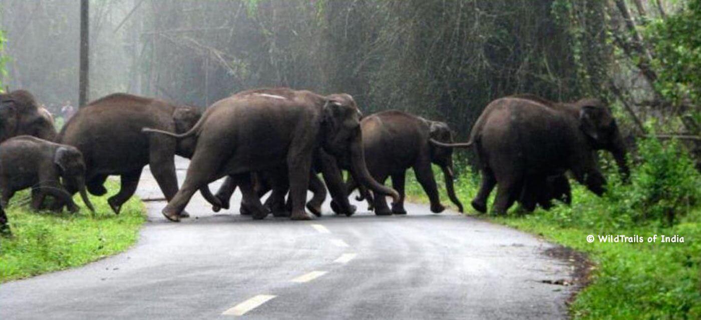 Muthanga Wayanad Wildlife Sanctuary