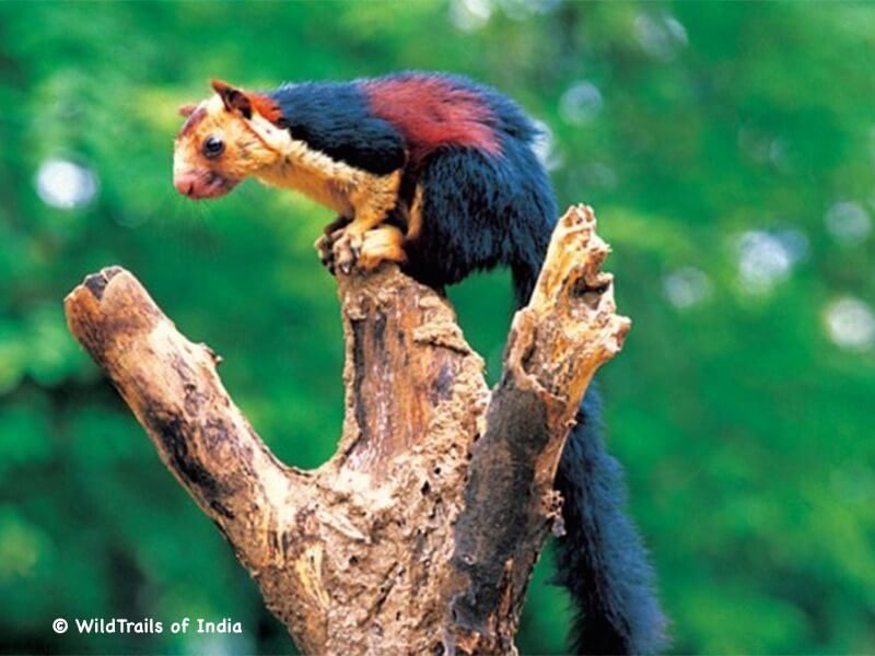 "Peechi-Vaazhaani Wildlife Sanctuary, WildTrails of India - ""One Stop Destination for all Indian Wildlife Enthusiasts"""