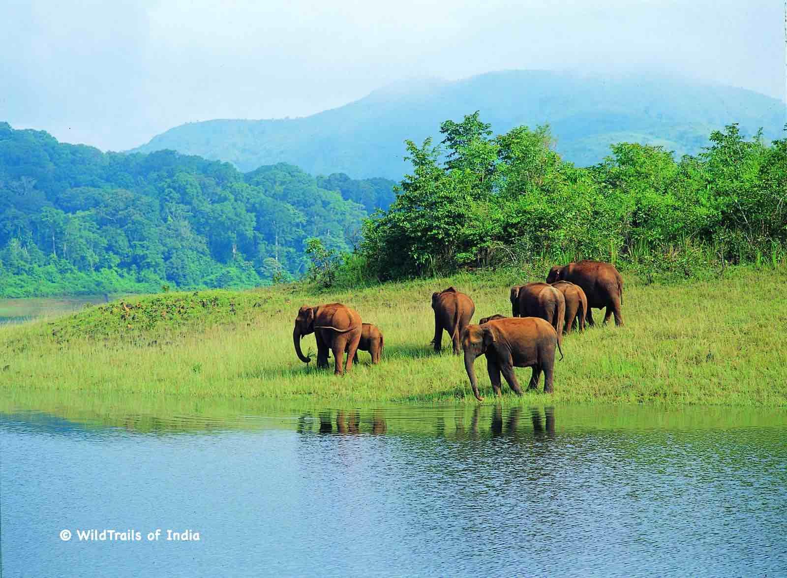 "Periyar Wildlife Sanctuary (Periyar Tiger Reserve, Periyar National Park, Thekkady Wildlife Sanctuary). WildTrails of India - ""One Stop Destination for all Indian Wildlife Enthusiasts"""
