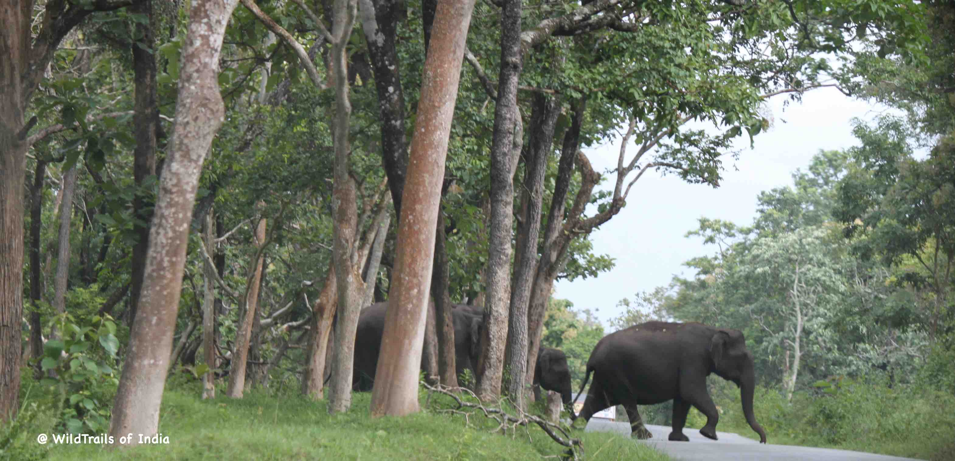Pushpagiri Sanctuary Wildlife[The WildTrails of India app is the best way to get all the details about Indian wildlife sanctuaries (best travel times, safari details, animal sightings, forest accommodations pairing, wildlife related activities, prices, etc). Learn more about WildTrails of India here.]