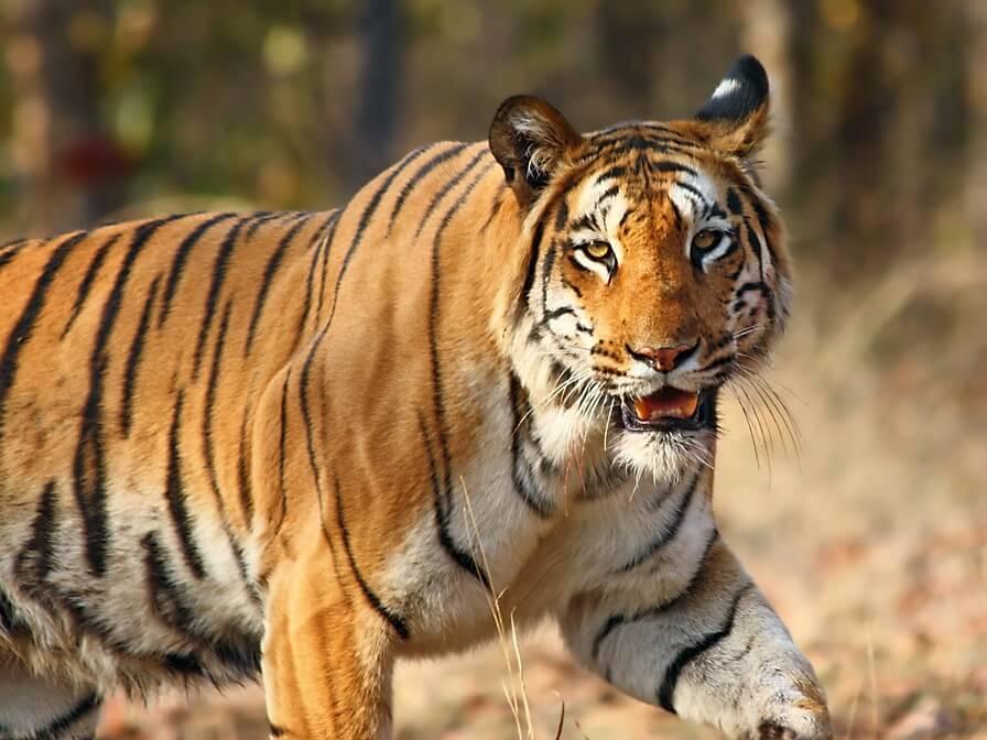 Biligiri Rangaswamy Temple (B.R.T.) Wildlife Sanctuary; Wildtrails of India