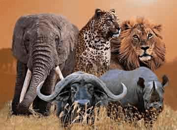 Big 5 of Africa