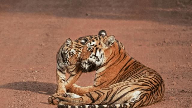 Complete List of National Parks & Wildlife Sanctuaries of Madhya Pradesh
