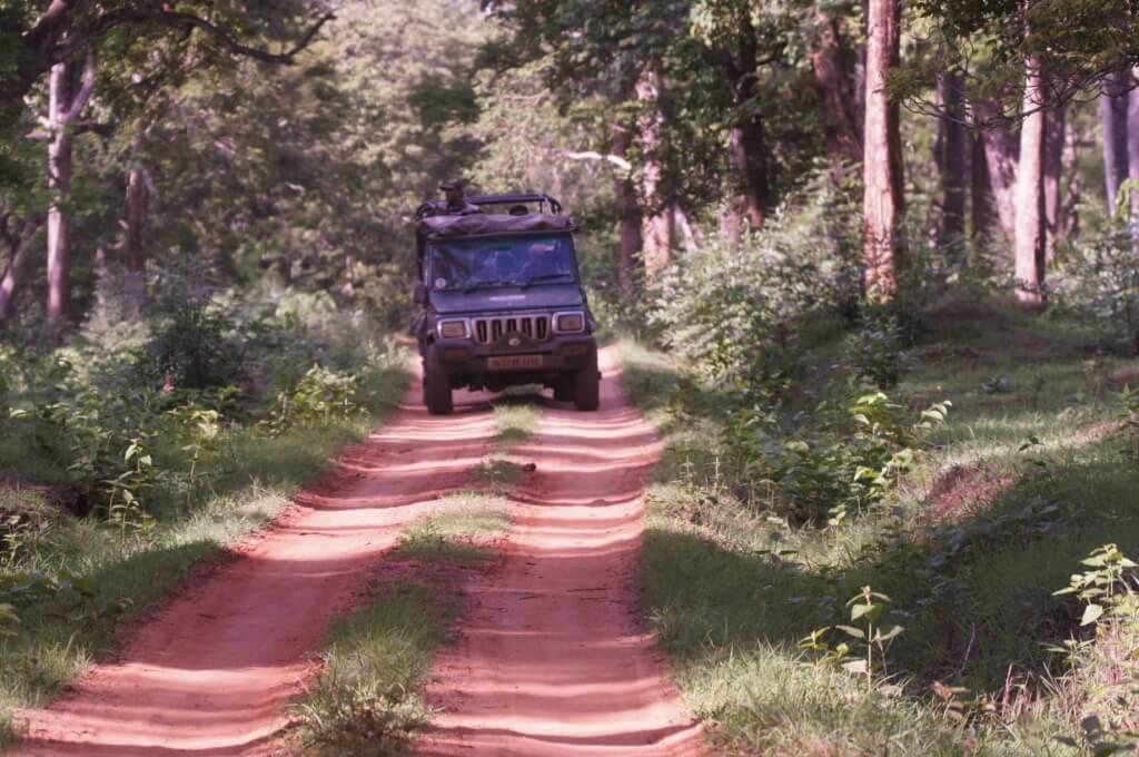 kabini safari