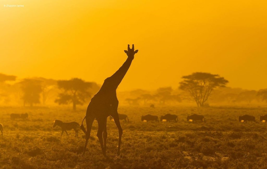 Guided Wildlife Photography Tours
