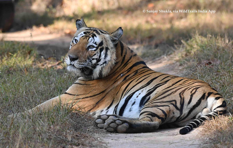 Kanha Safari Timings