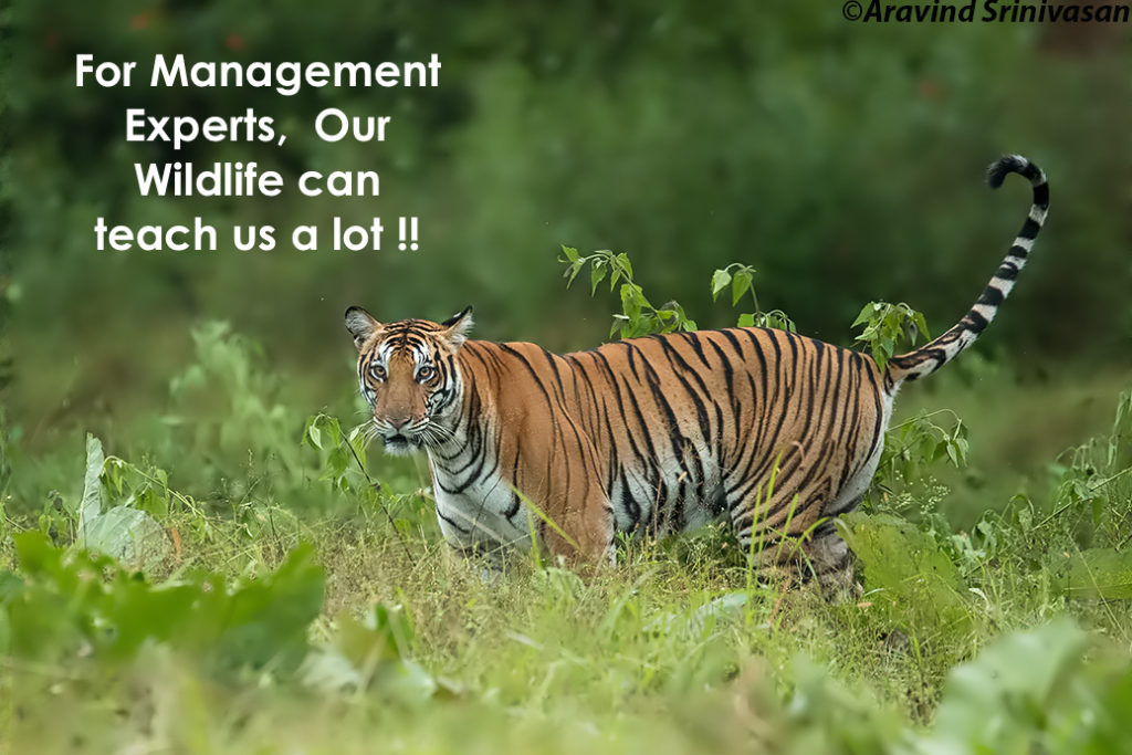tips tricks to learn from our wildlife