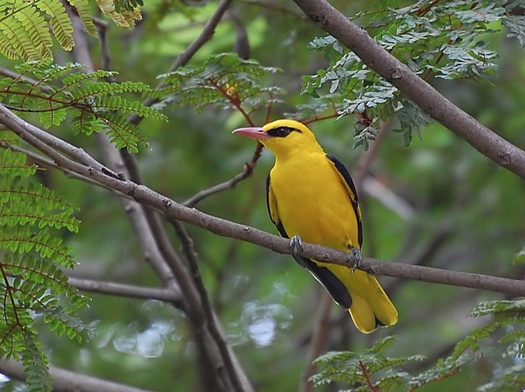 birding spots near bangalore