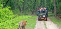 Bandipur Tiger Safari