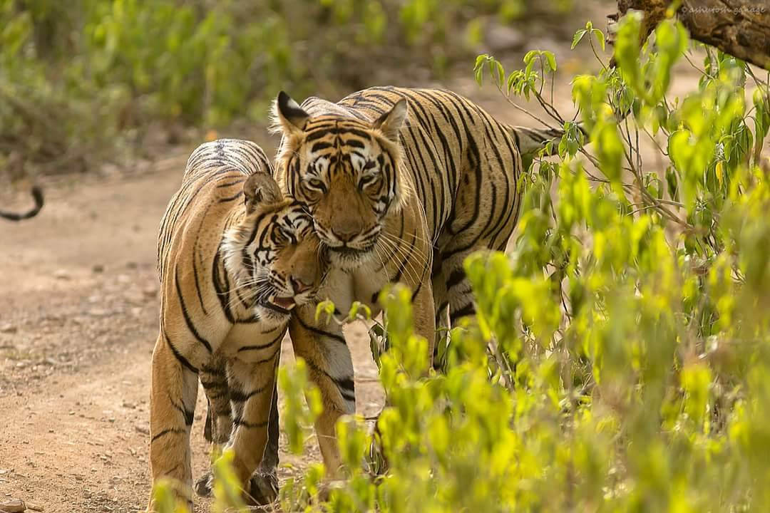 ranthambore packages