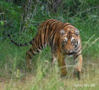 Plan Ranthambore Tiger Reserve Rajasthan from London