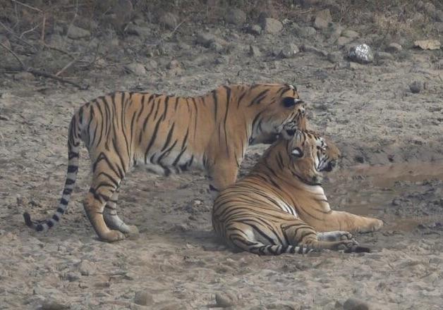 Ranthambore safari types and options