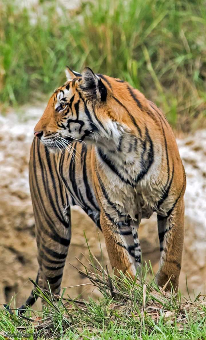 Best time for visiting Ranthambore