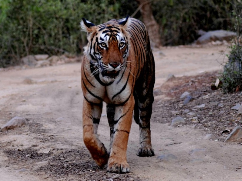 Distances and Routes to Ranthambore