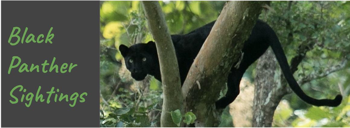 plan-a-Kabini-Trip-black-panther
