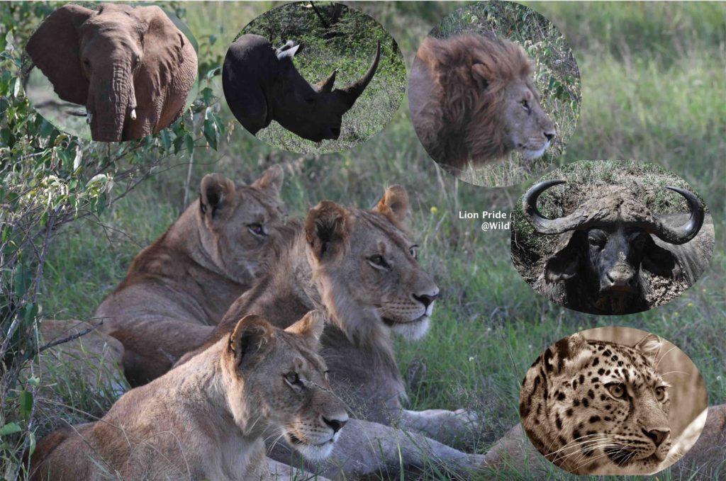 How to plan your Kenya Safari Trip Big 5 Kenya