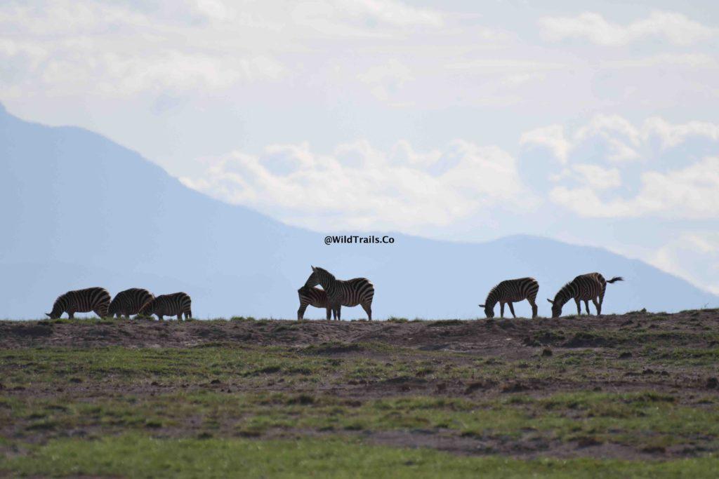 Kenya Safari for Big 5 Amboseli