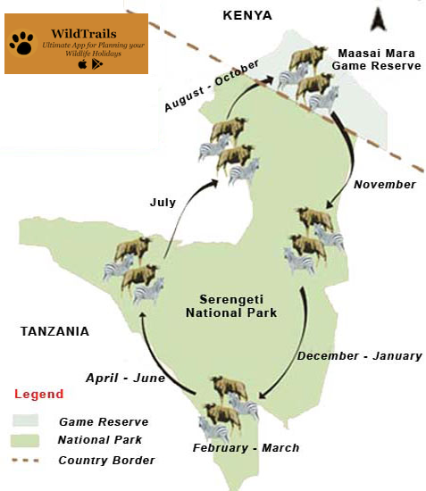 The Great Migration of Wildebeest in the Serengeti and the Masai Mara
