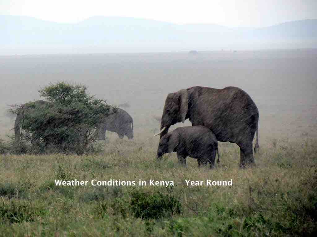 Round the Year Weather Conditions in Kenya for Safari Trips