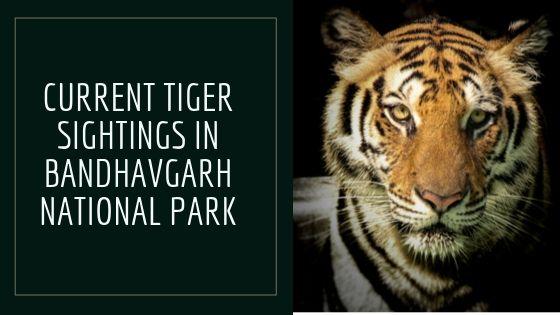 Recent Tiger Sightings