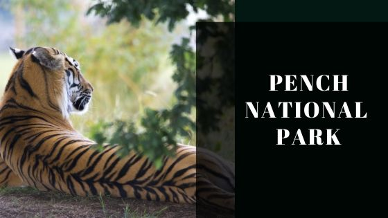 Pench Tger sighting zones