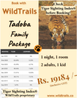 family Tadoba Package !
