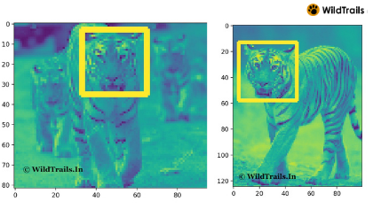 Tiger Face Recognition